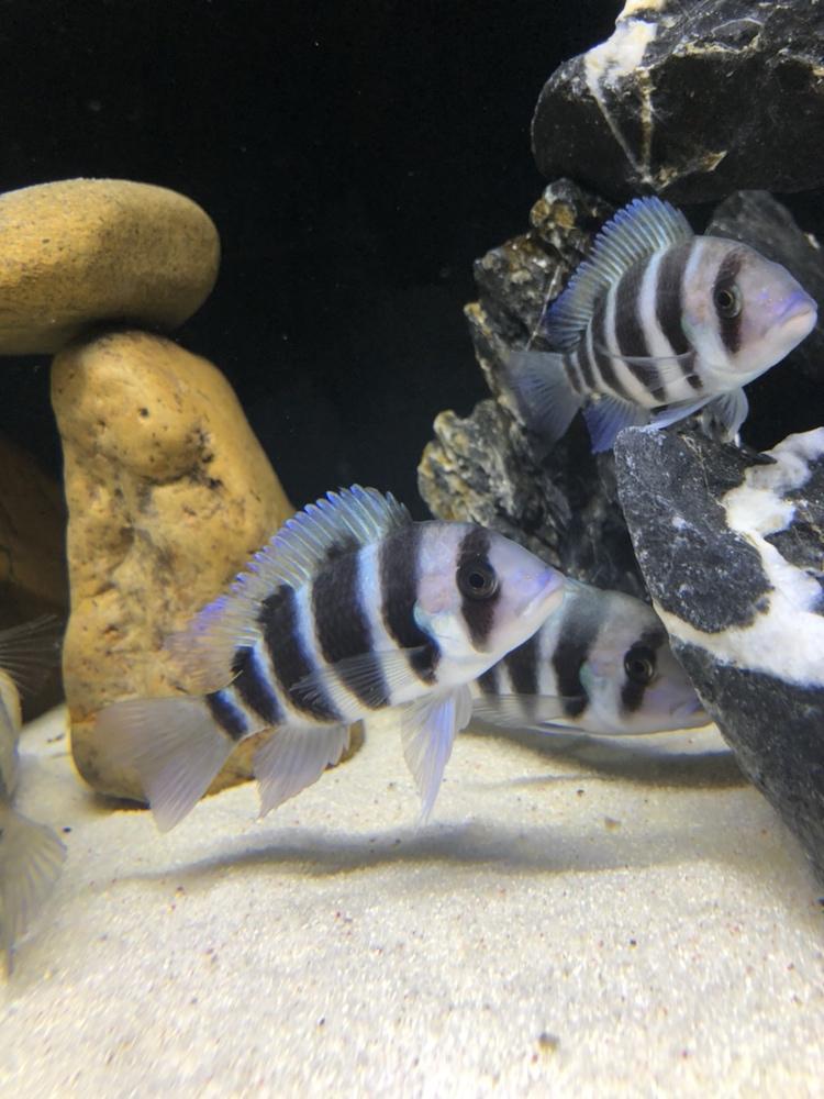 【西安祥龙水族馆】闲着无聊看看鱼拍拍照如此而已 西安龙鱼论坛 西安博特第5张