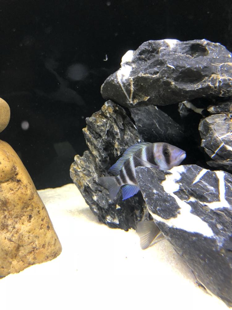 【西安祥龙水族馆】闲着无聊看看鱼拍拍照如此而已 西安龙鱼论坛 西安博特第7张