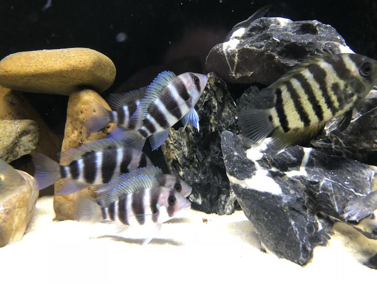 【西安祥龙水族馆】闲着无聊看看鱼拍拍照如此而已 西安龙鱼论坛 西安博特第8张
