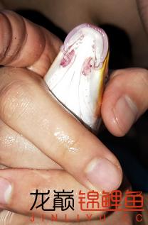 【西安哪个水族店有白子关刀鱼】本人刚刚养锦鲤不知道这锦鲤怎么样了?? 西安龙鱼论坛