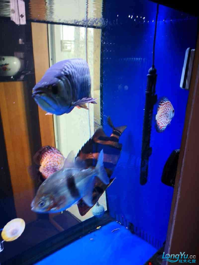 鱼缸水很清但鱼身上时不时有水霉病怎么处理?