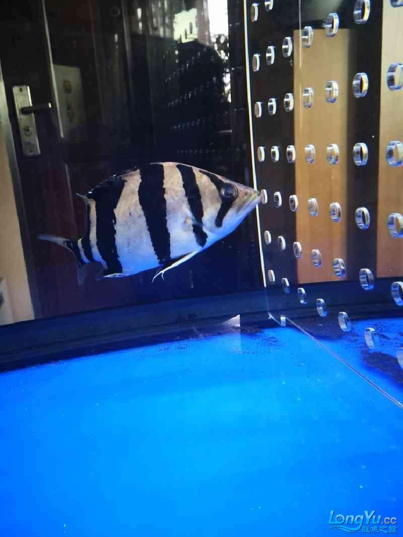 鱼缸水很清但鱼身上时不时有水霉病怎么处理? 西安龙鱼论坛 西安博特第3张