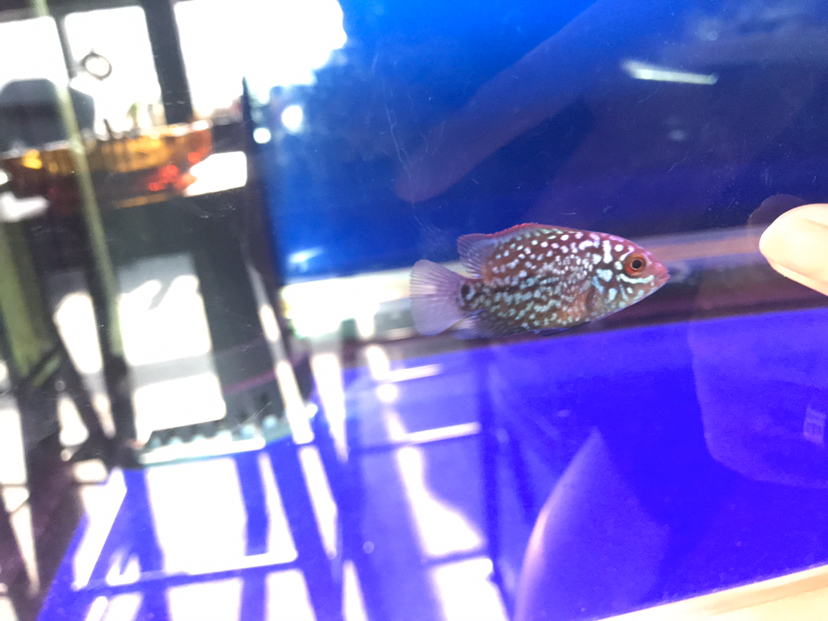 这断时间的成长 西安观赏鱼信息 西安博特第1张