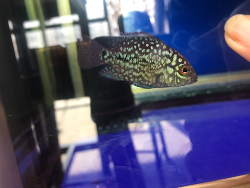 这断时间的成长 西安观赏鱼信息 西安博特第2张