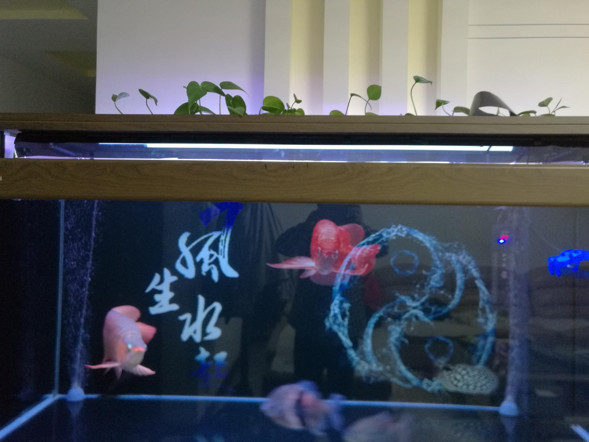 同鱼友共同分享一下 西安龙鱼论坛 西安博特第3张