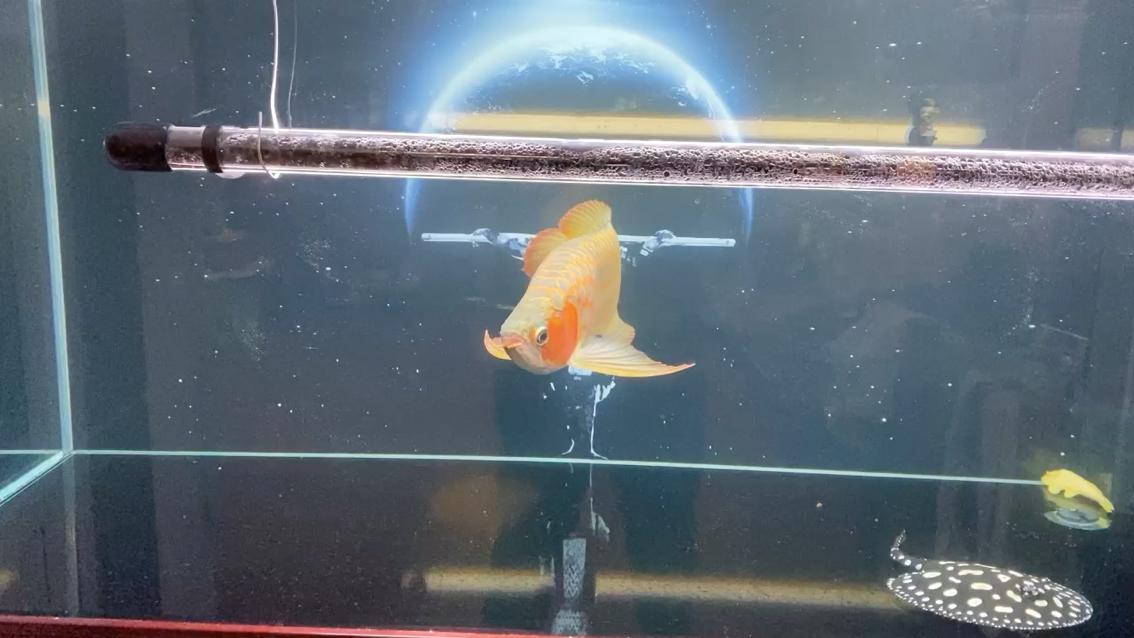 大型连续剧值每日一晒 西安观赏鱼信息