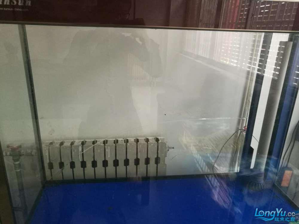 【西安哪个水族店有大花恐龙】森森水族缸背面玻璃破裂怎么更换?求助大神 西安龙鱼论坛 西安博特第2张