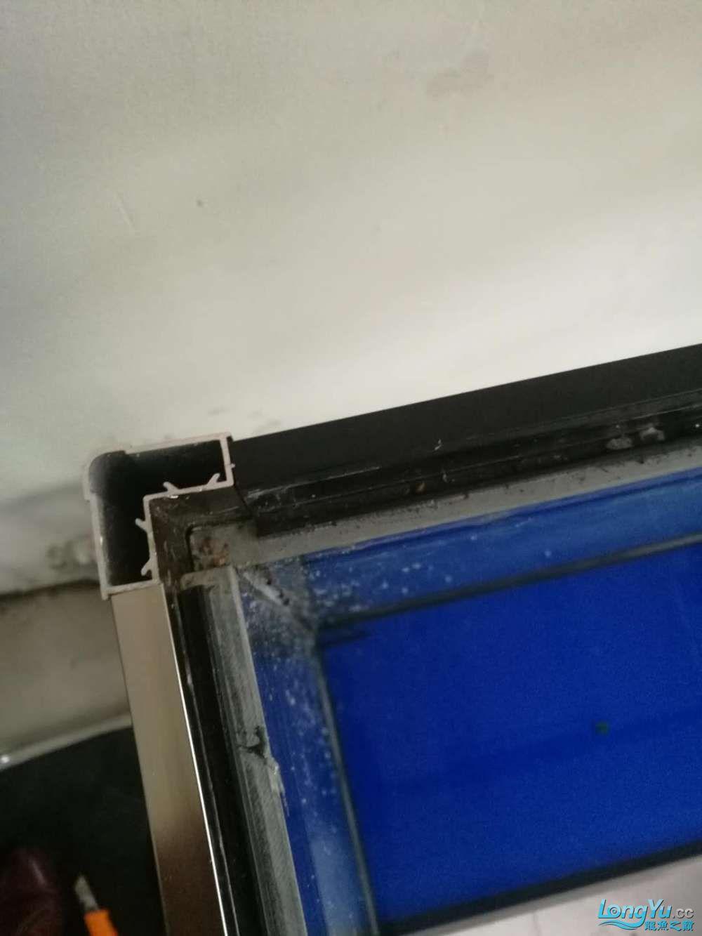 【西安哪个水族店有大花恐龙】森森水族缸背面玻璃破裂怎么更换?求助大神 西安龙鱼论坛 西安博特第1张