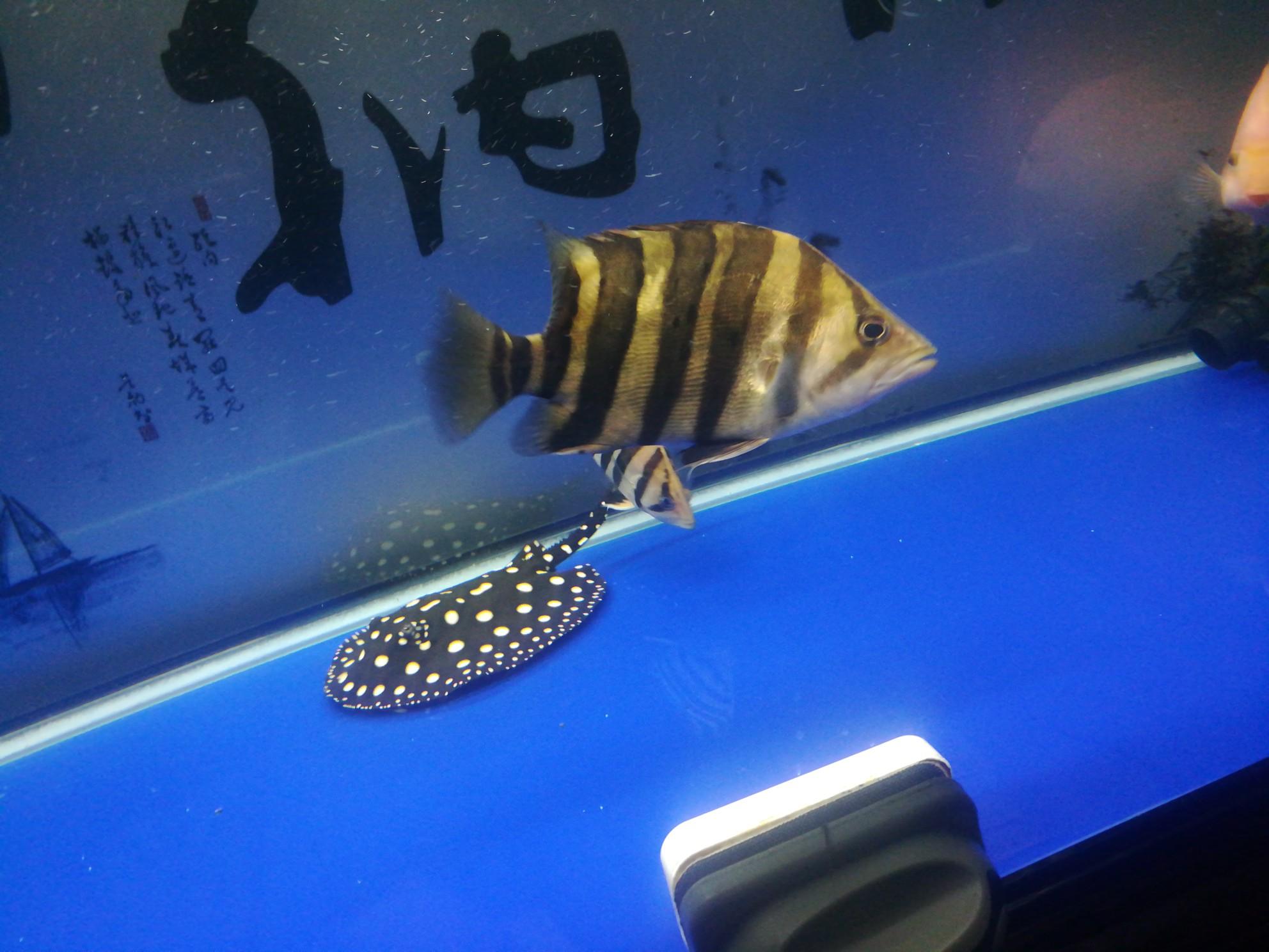 【西安哪个水族馆有金龙】哈[emoji:8J+YhA==] 西安龙鱼论坛 西安博特第1张