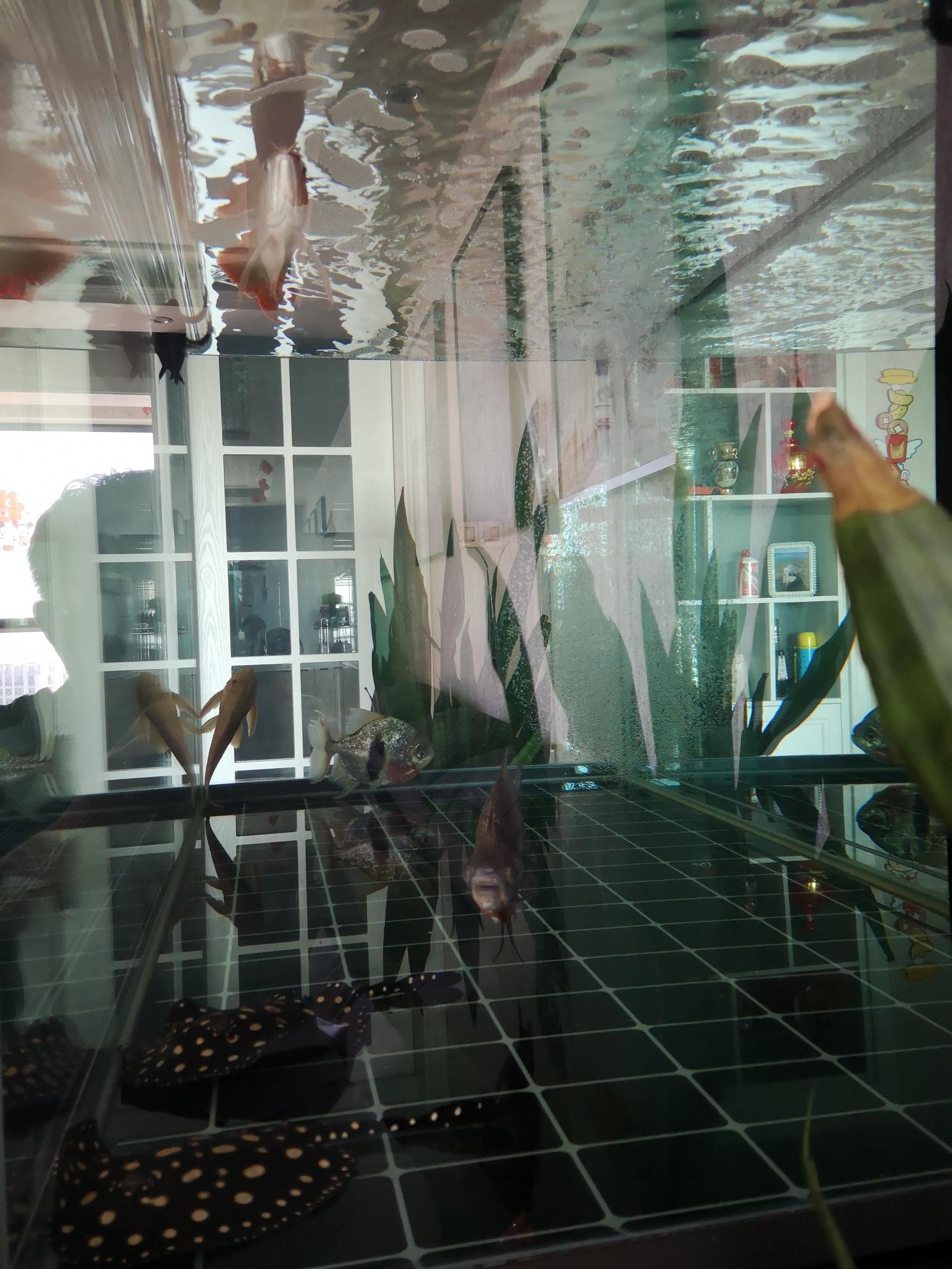 周末换水 西安观赏鱼信息 西安博特第5张