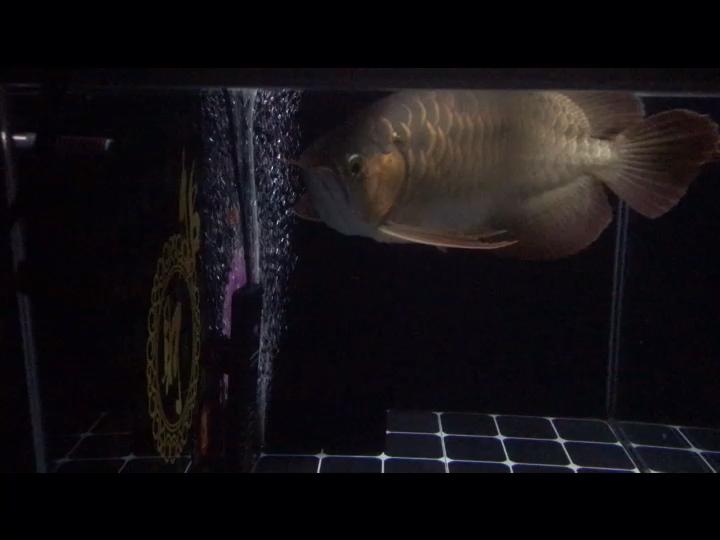 睡前赏魚是最好的催眠药