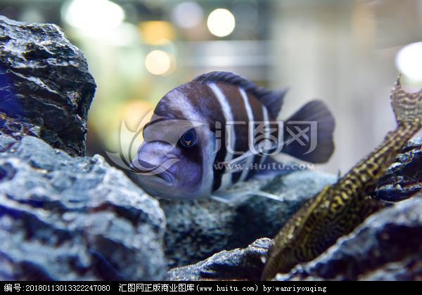 【西安福满钻观赏鱼】小鱼缸如何养鱼才不会死
