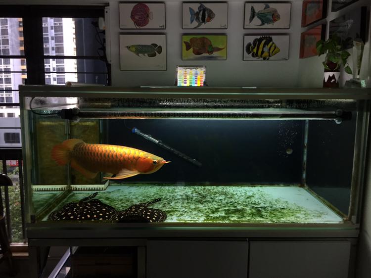 【西安黄金猫鱼】寂寞就测水