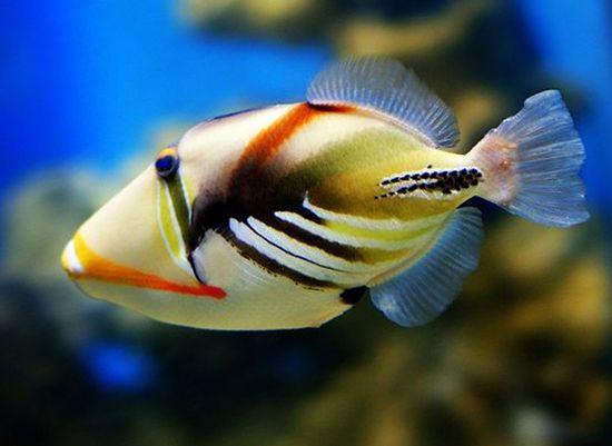 【西安黑卡鱼】淡定 西安观赏鱼信息 西安博特第2张
