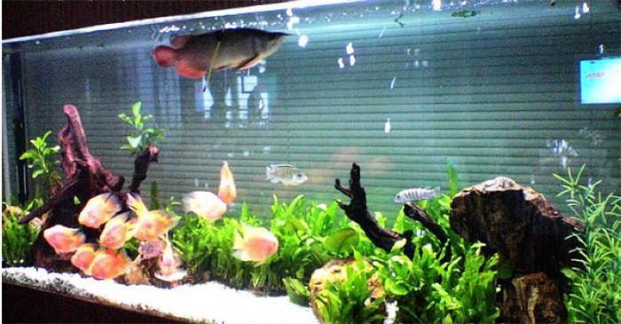 这个鱼吃食儿这么温柔吗??? 西安龙鱼论坛 西安博特第2张