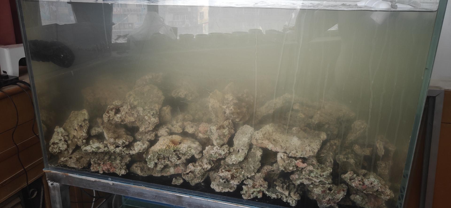 小海缸开起来 西安观赏鱼信息 西安博特第4张