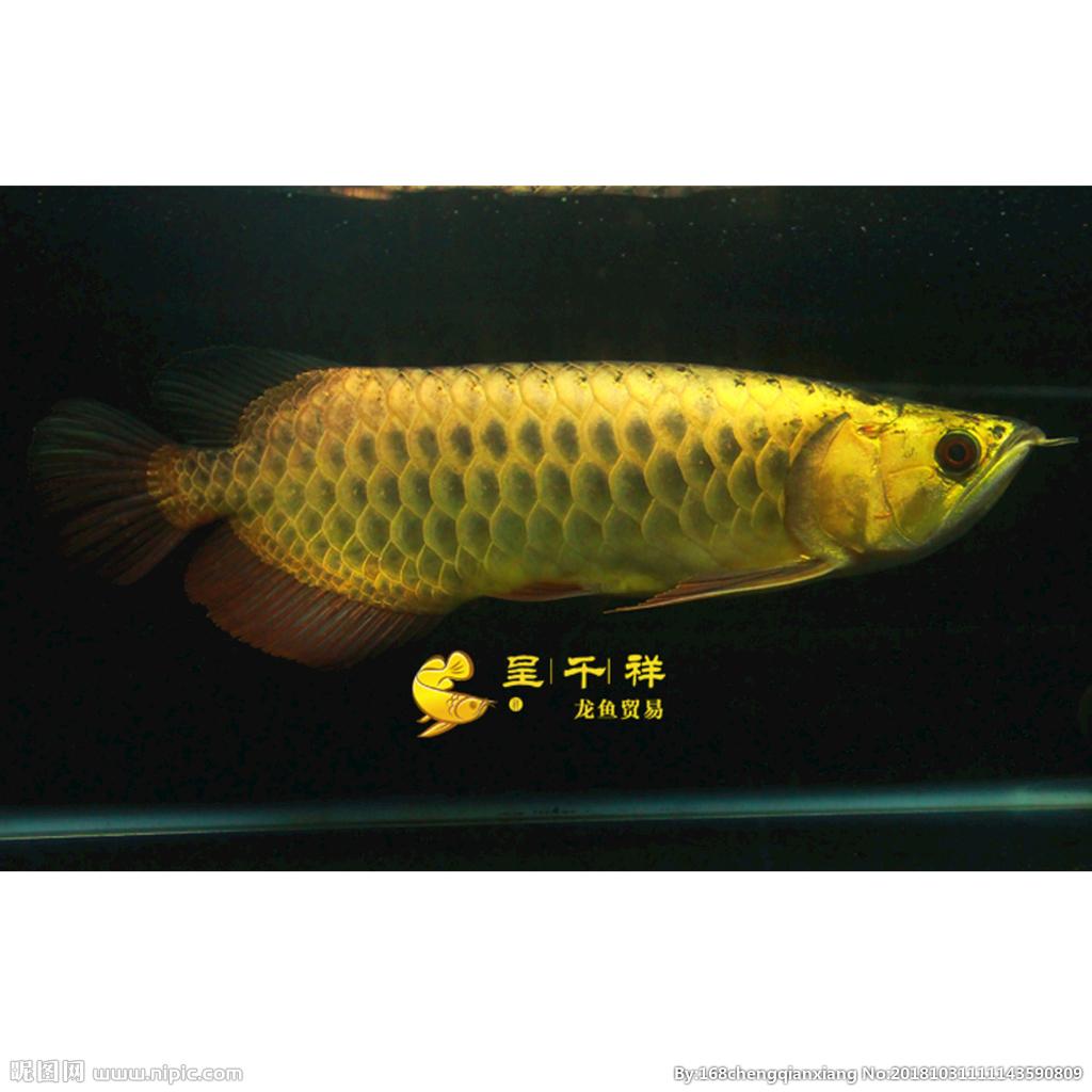 小海缸开起来 西安观赏鱼信息 西安博特第5张