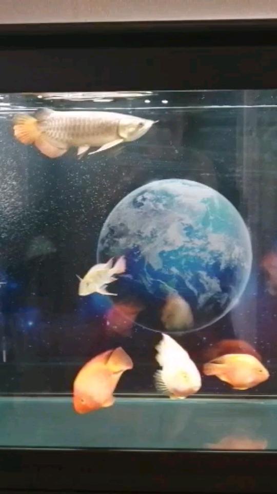 蜗居 西安观赏鱼信息 西安博特第1张