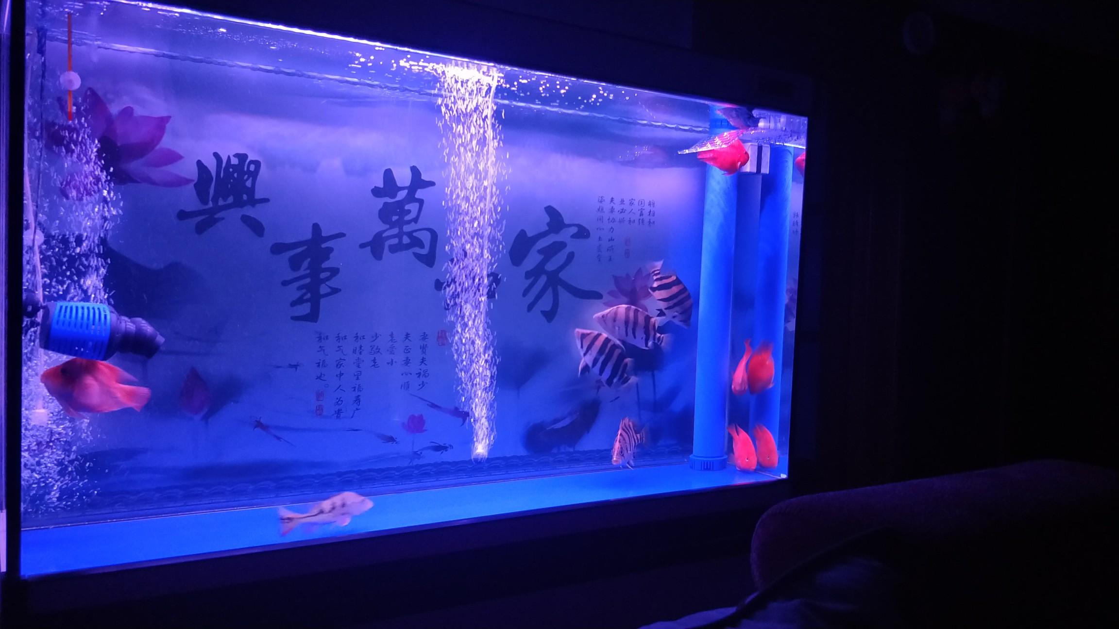 【西安最贵最好龙鱼】虎[emoji:8J+QoA==] 西安龙鱼论坛 西安博特第8张