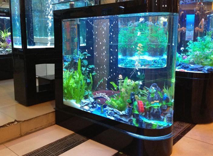 【西安哪里有观赏鱼】自制水景太简陋 西安龙鱼论坛 西安博特第4张