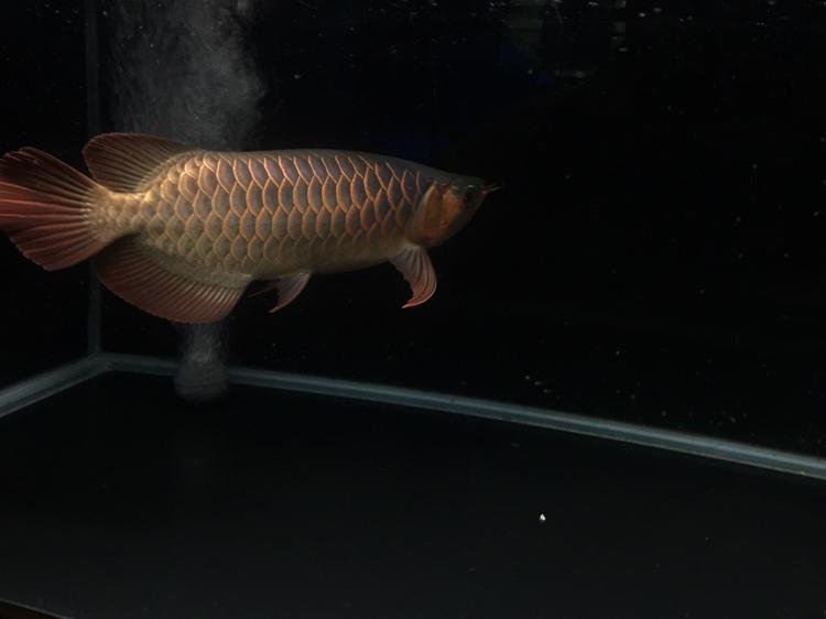 拍不出你的美 西安观赏鱼信息 西安博特第4张