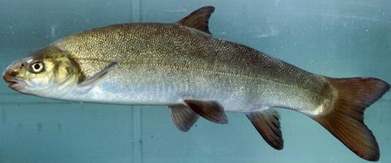 拍不出你的美 西安观赏鱼信息 西安博特第7张