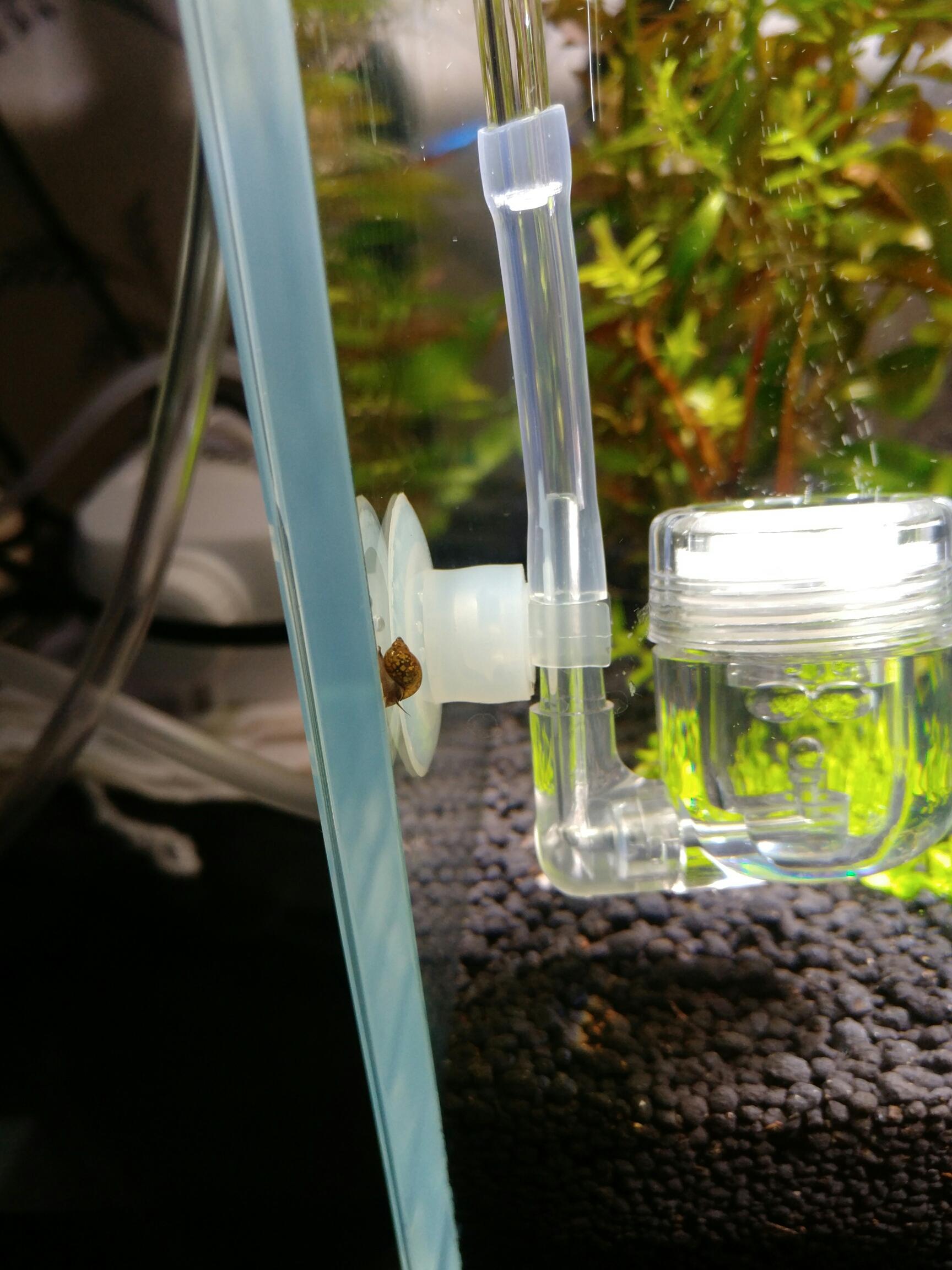 最近草缸该修剪了还莫名其妙长螺 西安观赏鱼信息 西安博特第2张