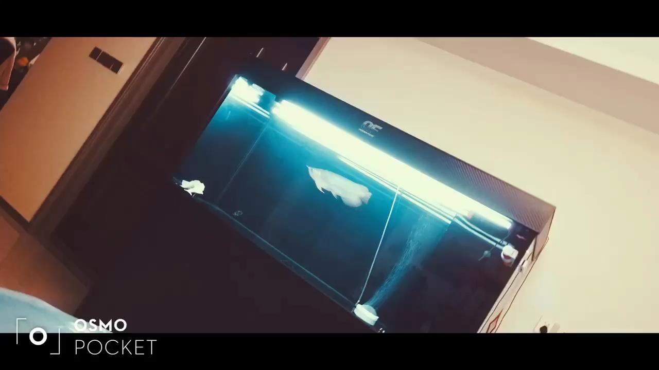 新气象 西安观赏鱼信息 西安博特第1张