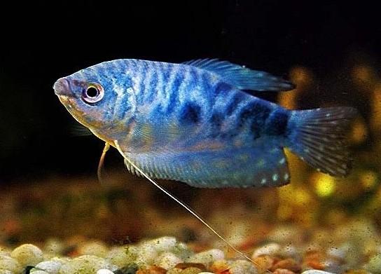 新气象 西安观赏鱼信息 西安博特第2张