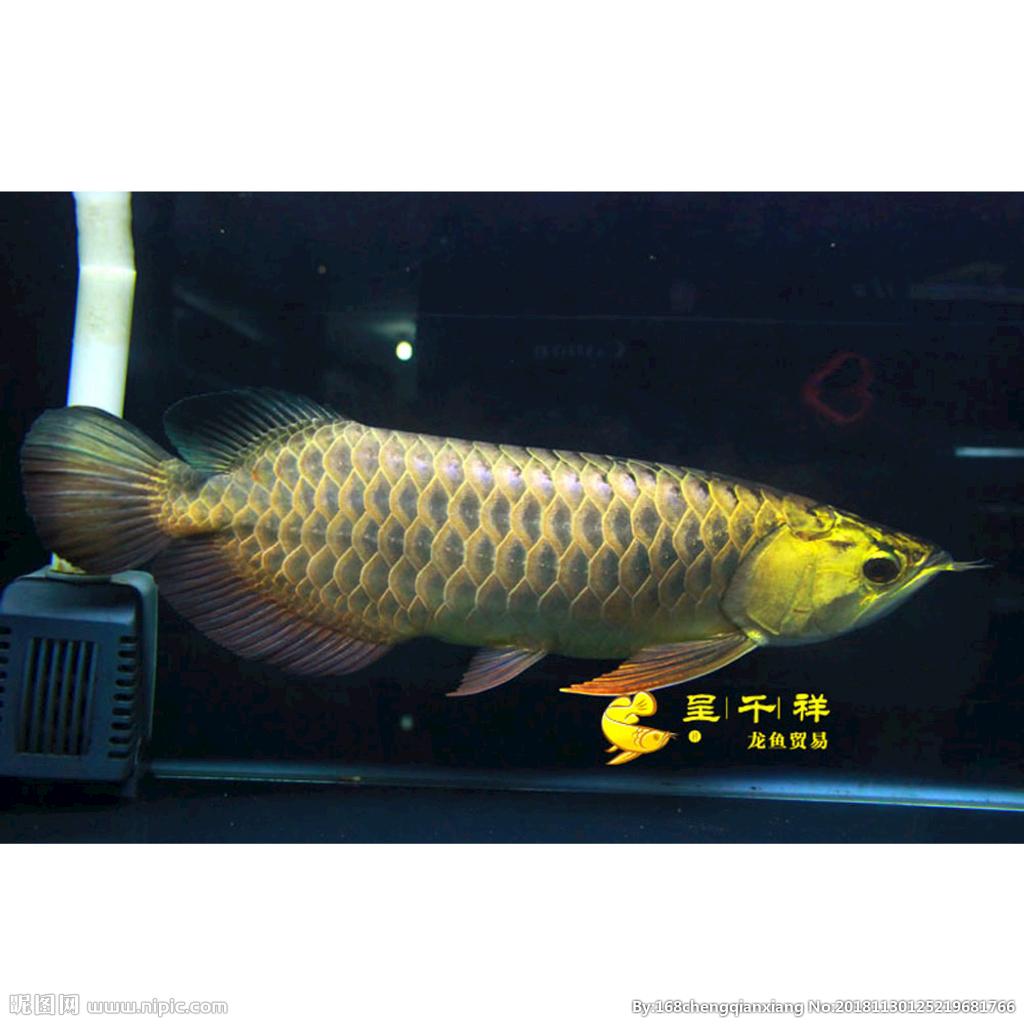 小鱼入缸 西安观赏鱼信息