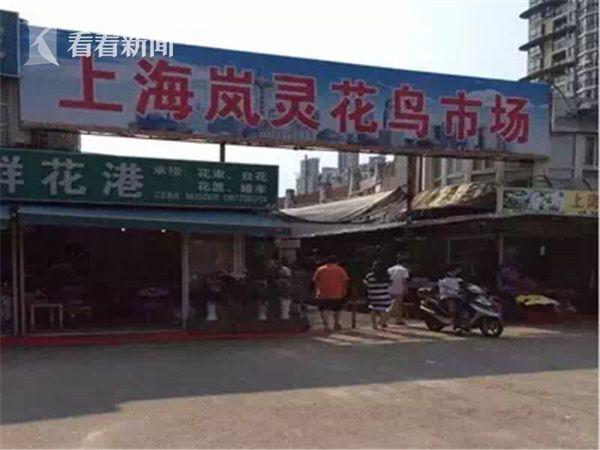 三龙混养先隔离 西安龙鱼论坛