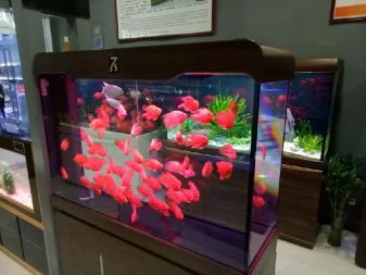 【西安水族馆在哪里】1米8的彩鲽缸能不能站个人在里面