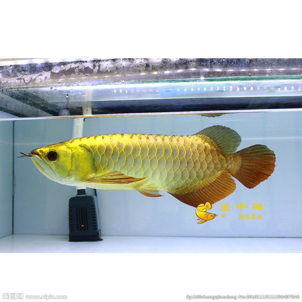 大师们这是什么卵看着起一身鸡皮疙瘩 西安观赏鱼信息 西安博特第2张