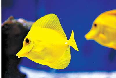 五虎小将 西安观赏鱼信息 西安博特第6张