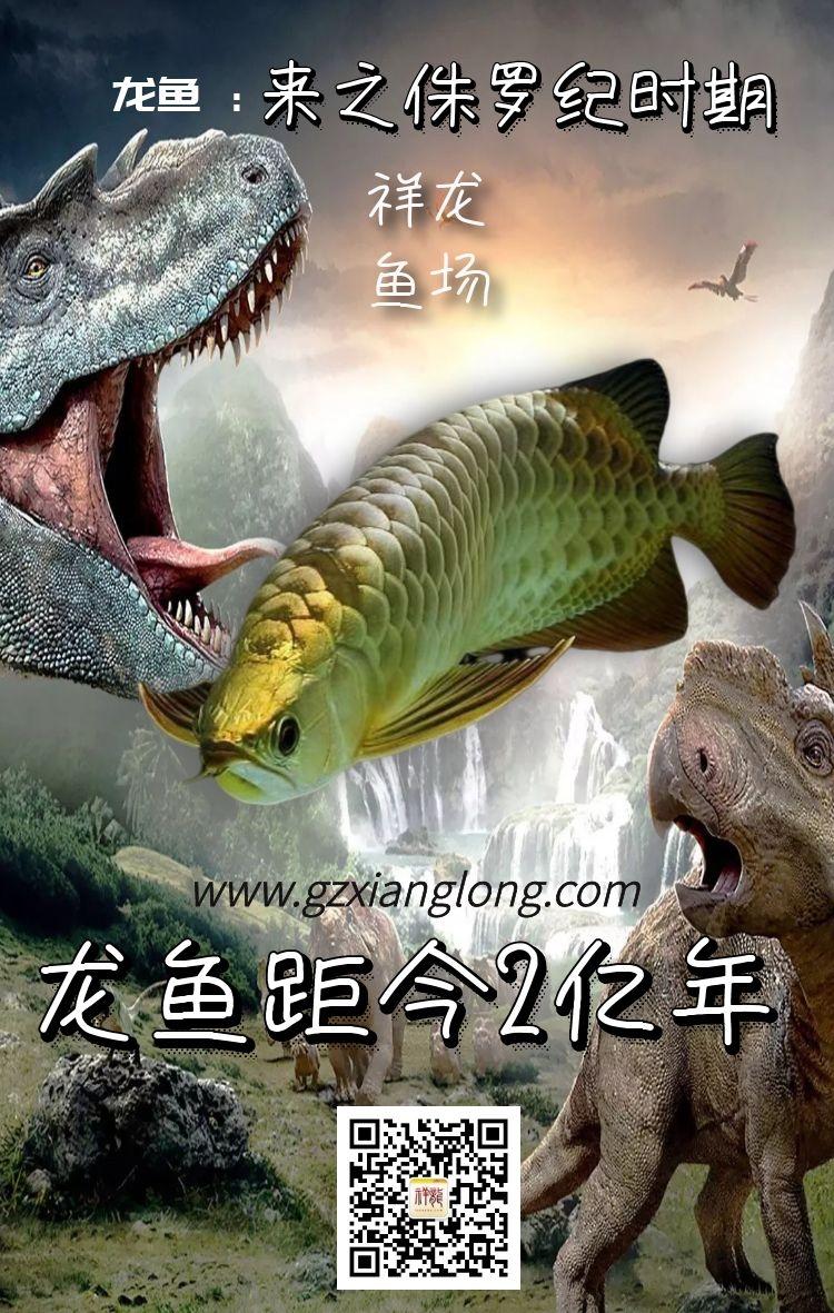 西安琉璃祥龙水族馆恭贺本市鱼友新春快乐祝福2021