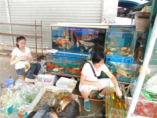 求助想做个背滤缸705050要多厚的玻璃? 西安龙鱼论坛