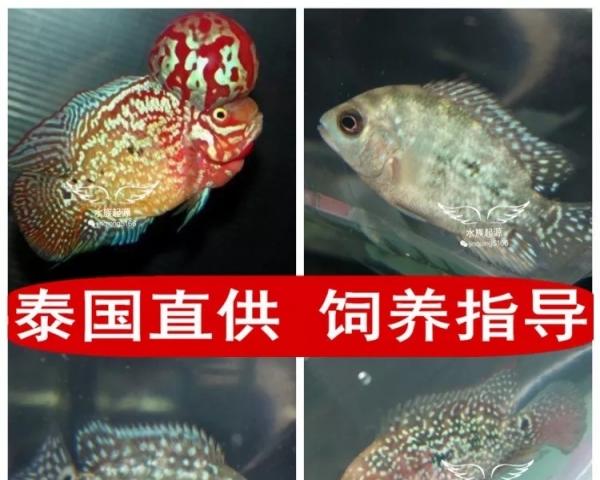 【西安水族鱼缸】办公室造了一个缸 西安观赏鱼信息 西安博特第10张