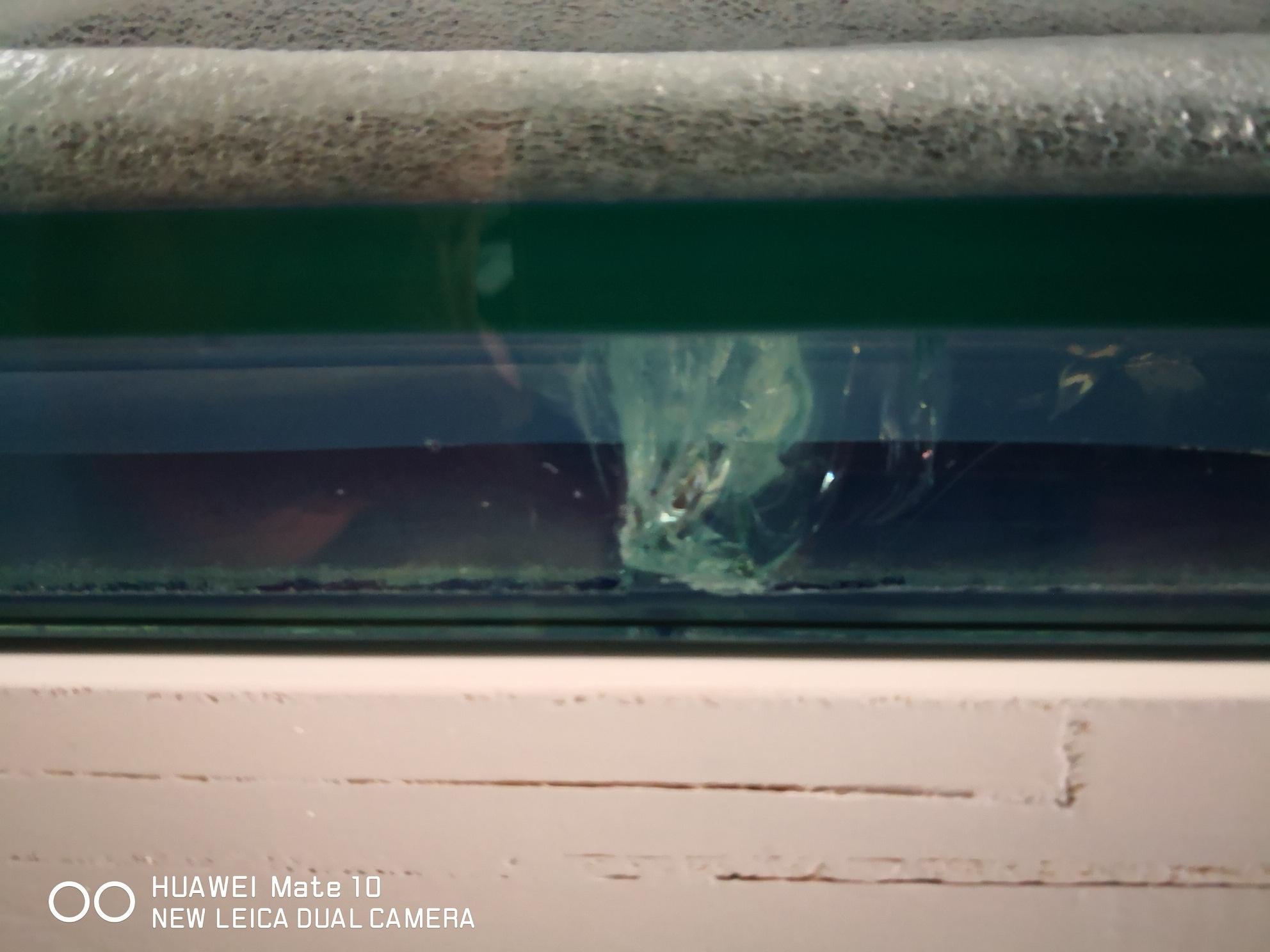 【西安花鸟鱼市】地中海水族 西安观赏鱼信息 西安博特第3张