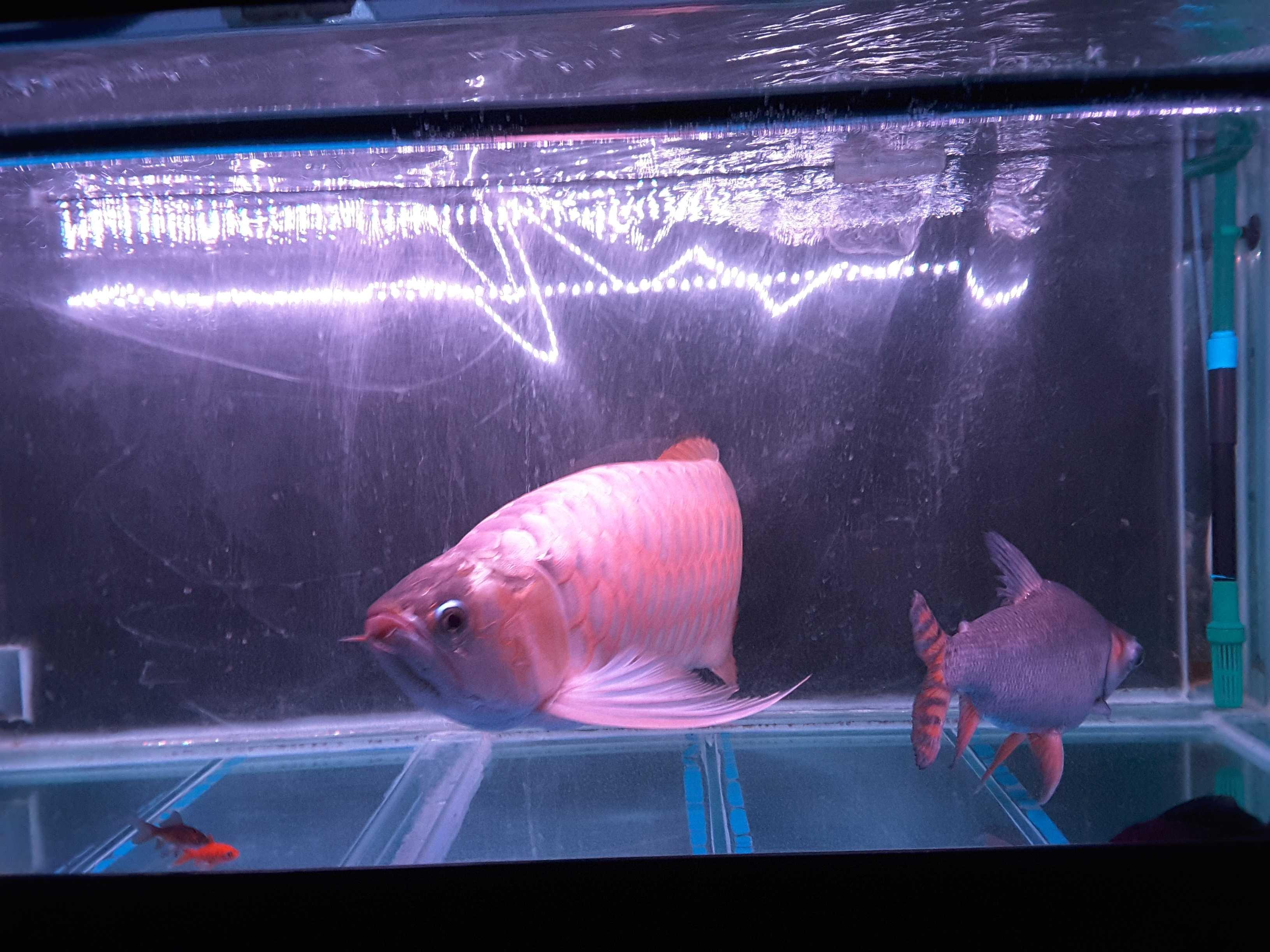 今日 西安观赏鱼信息 西安博特第2张