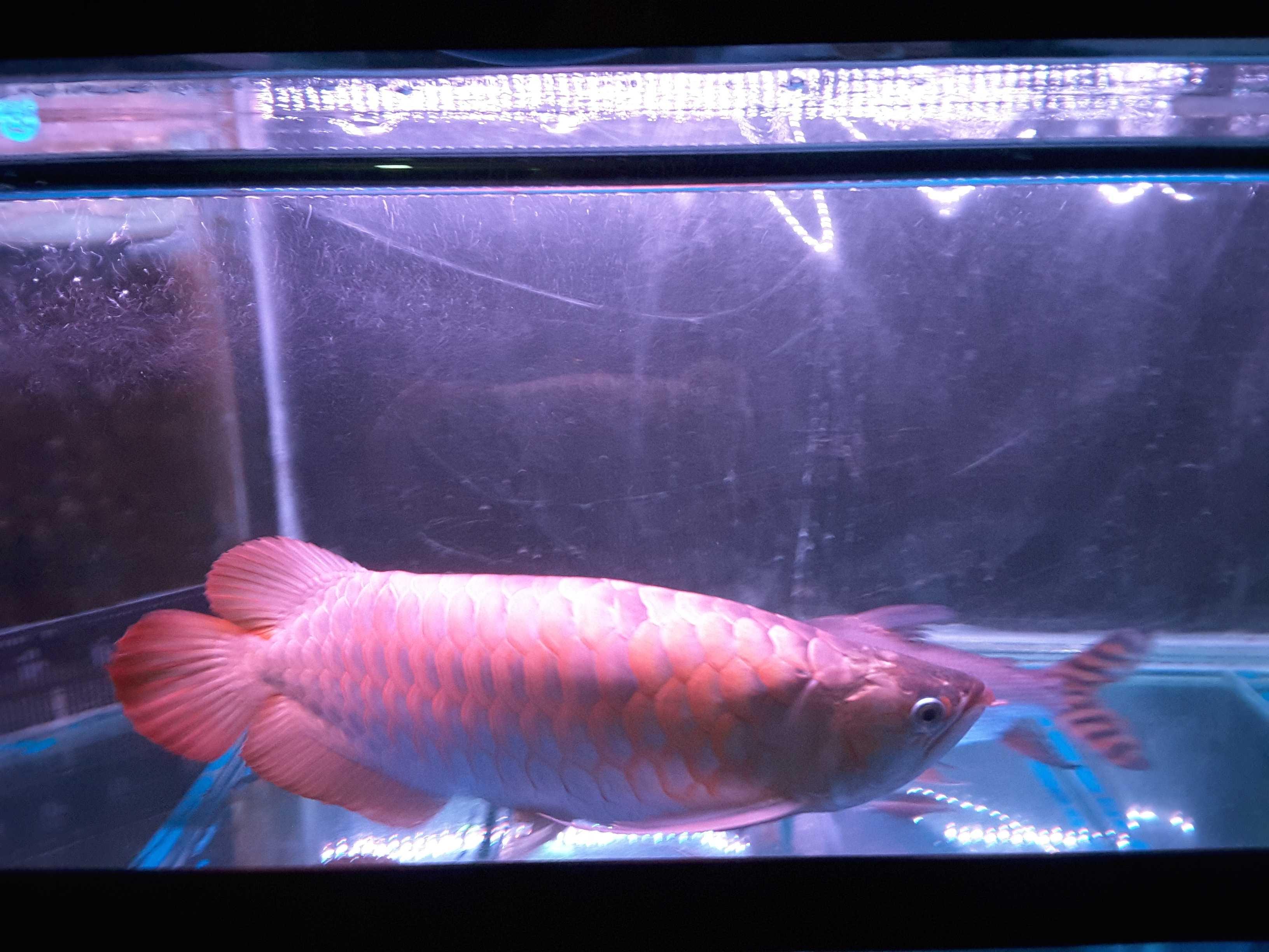 今日 西安观赏鱼信息 西安博特第3张