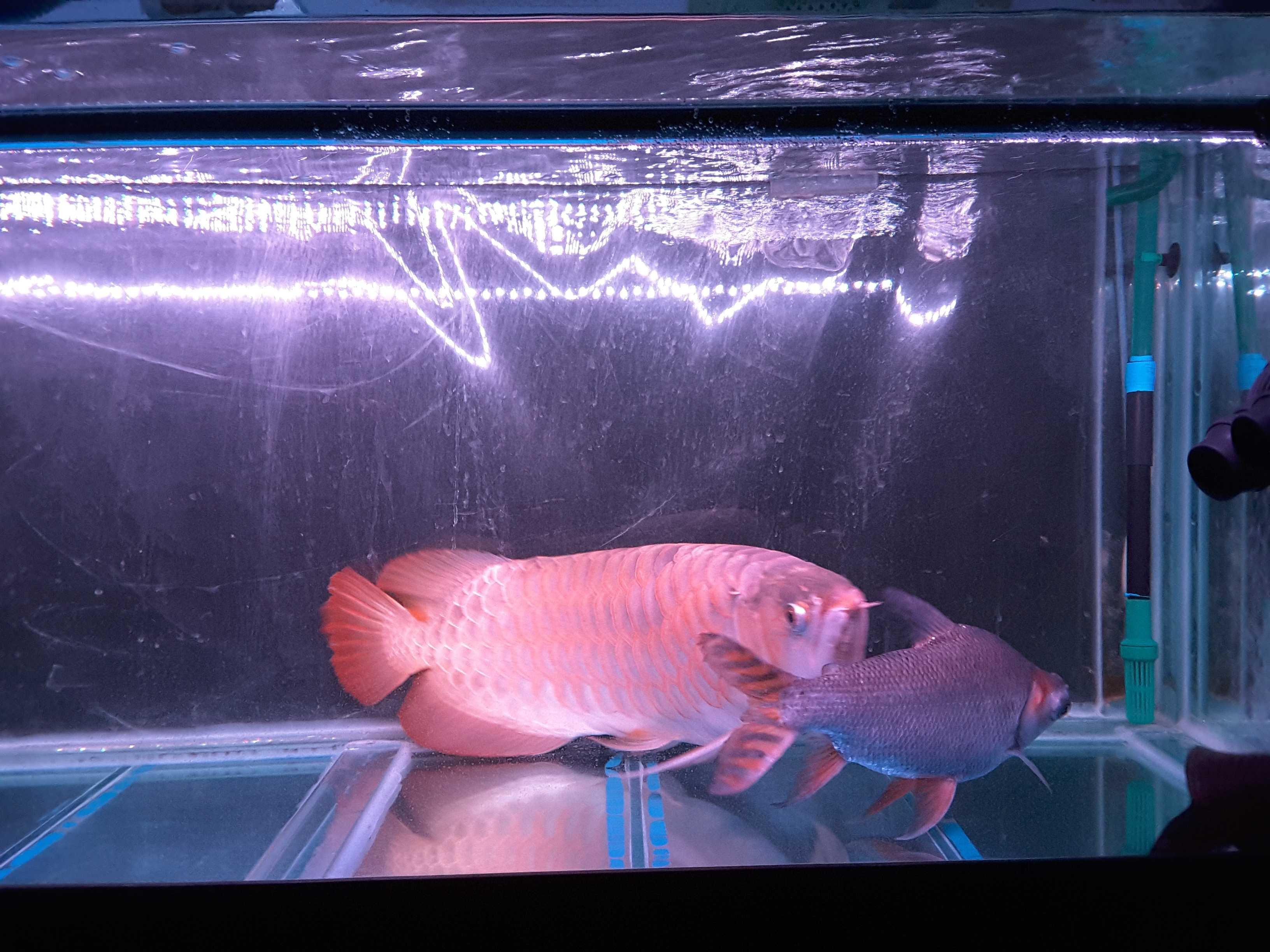今日 西安观赏鱼信息 西安博特第4张