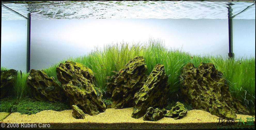 【西安花鸟鱼虫市场在哪】经典的松皮石造景合集 西安观赏鱼信息 西安博特第1张
