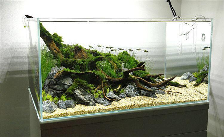 【西安哪个水族店有财神鹦鹉-红财神】极致的美 西安观赏鱼信息 西安博特第2张