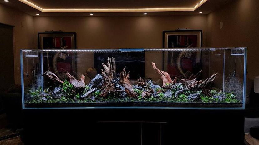【西安哪个水族店有财神鹦鹉-红财神】极致的美 西安观赏鱼信息 西安博特第3张