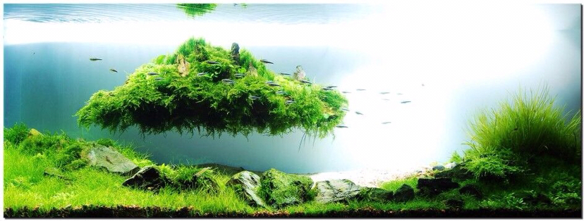 【西安哪个水族店有财神鹦鹉-红财神】极致的美 西安观赏鱼信息 西安博特第5张