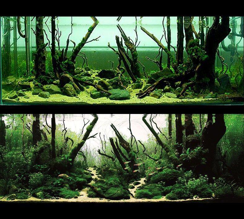 【西安哪个水族店有财神鹦鹉-红财神】极致的美 西安观赏鱼信息 西安博特第6张