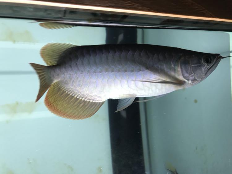 又上当 西安观赏鱼信息 西安博特第1张