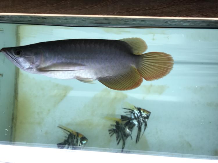 又上当 西安观赏鱼信息 西安博特第3张
