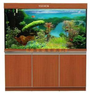 【西安帝王魟鱼】龙鱼顶灯颜色问题 西安观赏鱼信息 西安博特第4张