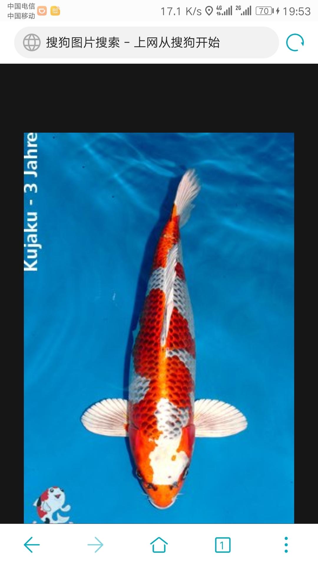 【西安白子魟鱼】锦鲤第八篇 西安观赏鱼信息 西安博特第5张